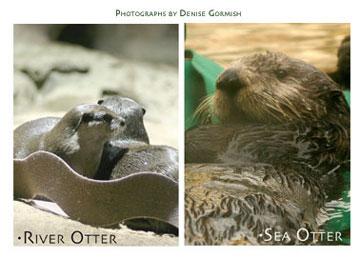otters21.jpg