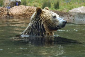 zoobear2.jpg