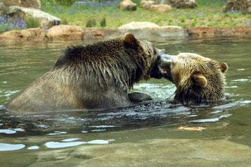 zoobears.jpg