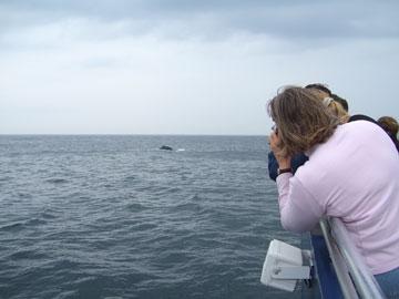 whalephoto.jpg